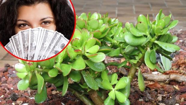 Drvo novca – simbol bogatstva i uspeha