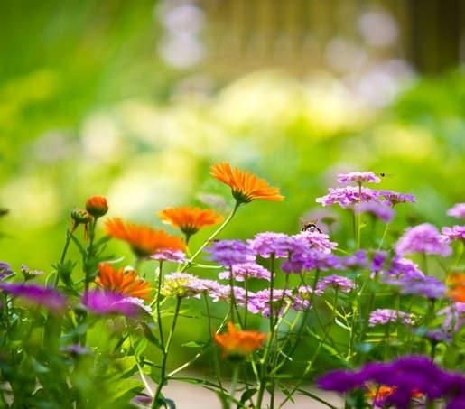 Feng shui simboli cveća, voća i bilja