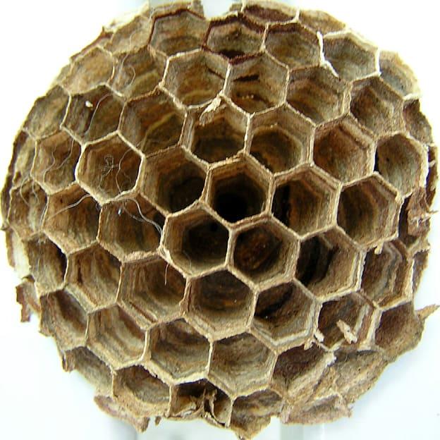 Simbolika osinjeg gnezda