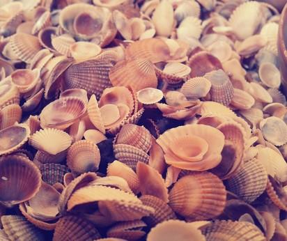 Divinacija sa morskim školjkama