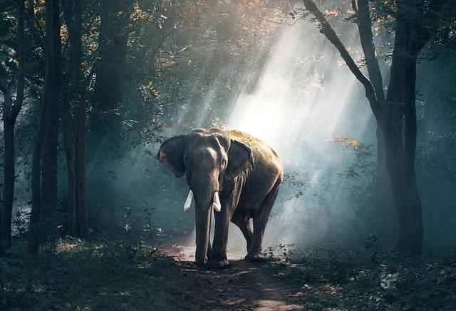 Gatanje iz taloga kafe – simbol slon