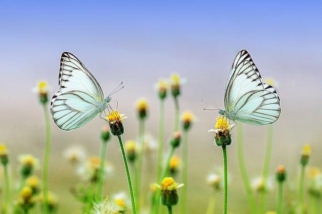 Narodna verovanja o insektima