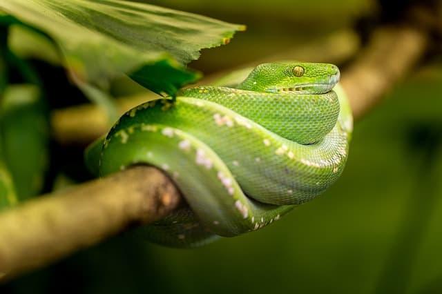 Simbolika zmije – Feng shui
