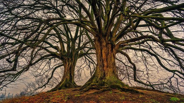 Gatanje iz taloga kafe – simbol stablo