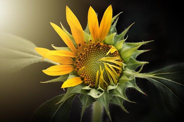 Kakvu poruku nam donosi žuta boja