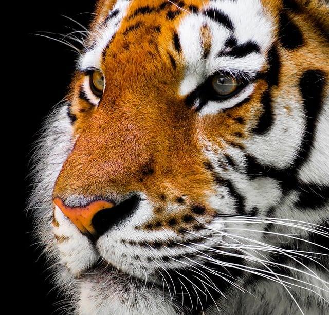 Tigrovo oko – kristal zaštite od negativnih uticaja i uroka