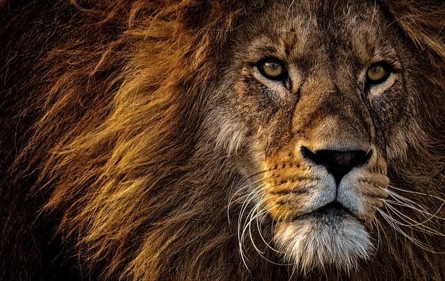 Gatanje iz taloga kafe – simbol lav