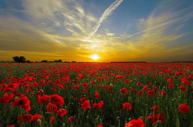 Sunce u Raku – vreme rasta i izobilja