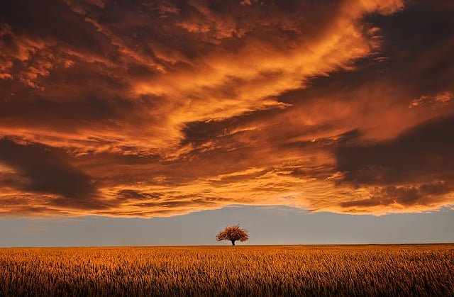 Kakvu poruku nam otkrivaju snovi o narandžastoj boji