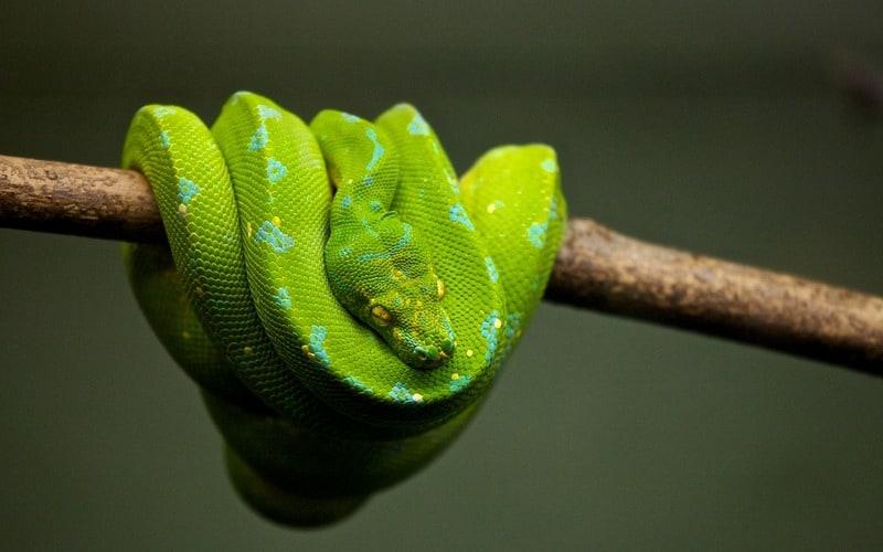 Simbolika zmije u snu