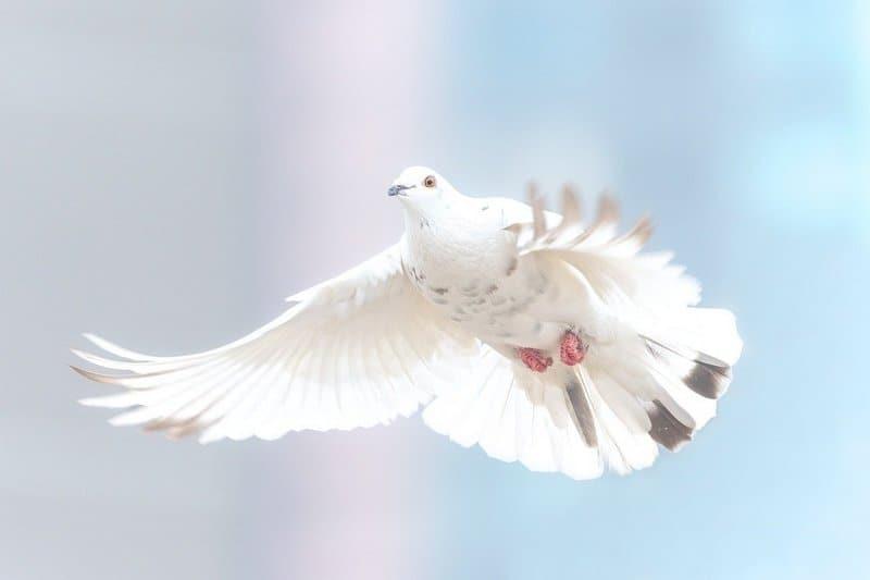 Značenje snova: Golub – simbol transformacije i novih početaka