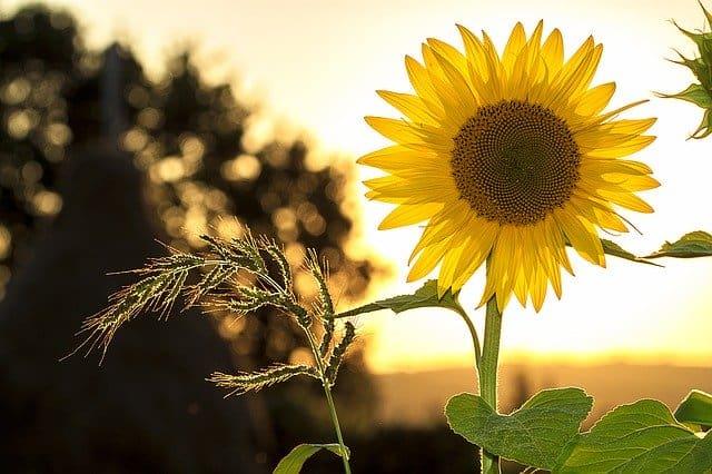Hiromantija – šta nam otkriva linija Sunca