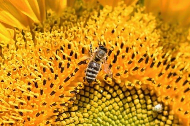 Snovi o pčelama – predznak blagoslova ili teškoća?