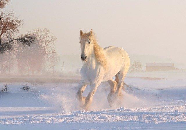 Gatanje iz taloga kafe – simbol konja