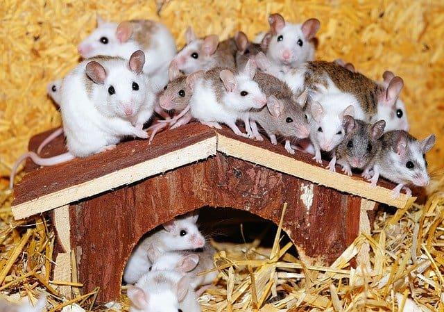Snovi o miševima