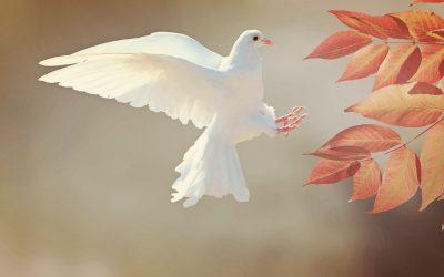 Psihološko značenje snova o pticama